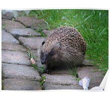 Hedgehog British Wildlife Mammal Poster