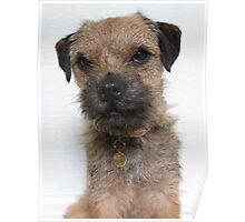 Heidi HellHound Border Terrier Dog Poster