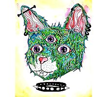 Psych Kitty Photographic Print