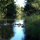 COOMERA RIVER by Colin Van Der Heide