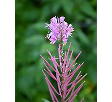 Flowers in Fairbanks, Alaska Photographic Print
