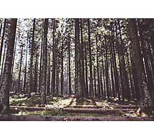 the sound of the forest Photographic Print