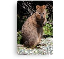 The Quokka of Rottnest Canvas Print
