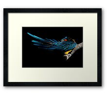 The Fine Art of Preening Framed Print
