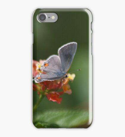 Blue Hairstreak Butterfly iPhone Case/Skin