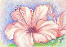 hibiscus by terezadelpilar~ art & architecture
