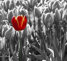 ...one to stand out in spring... by John44