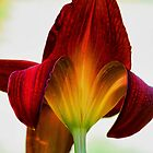 Daylily - Afternoon Sunlight by T.J. Martin