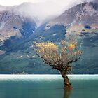 The Lone Willow - Glenorchy New Zealand by Beth  Wode