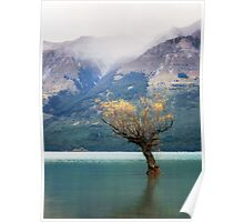 The Lone Willow - Glenorchy New Zealand Poster