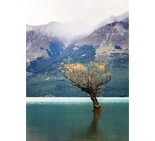 The Lone Willow - Glenorchy New Zealand Photographic Print