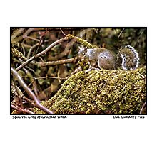 Squirrel Grey of Gruffalo Wood Photographic Print