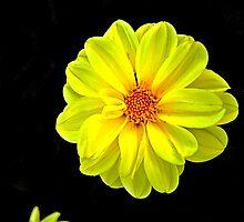 Yellow by Bob Wall