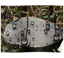 Monday rain Poster
