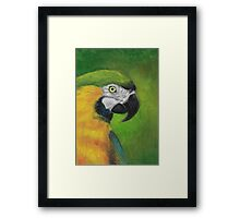 green and gold parrot macaw original oil pastel painting Framed Print