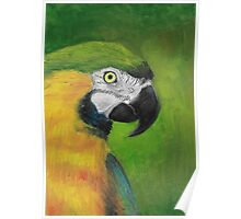 green and gold parrot macaw original oil pastel painting Poster