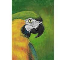 green and gold parrot macaw original oil pastel painting Photographic Print
