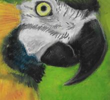 green and gold parrot macaw original oil pastel painting Sticker