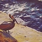 Pelican Point by Jayne Whitaker