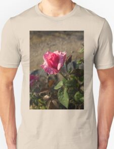Spring Glow In Pink - a Sweetheart Rosebud With Dewdrops Unisex T-Shirt