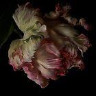 The Dutch Tulip by EbyArts