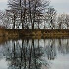 Of Mirrors and Trees by Georgia Mizuleva
