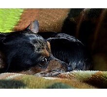 The Snuggle Puppy Photographic Print
