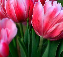 Tulips by john forrant