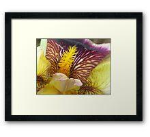 Colorful Iris  Framed Print