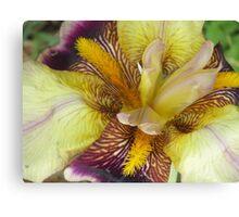 Colorful Iris #2 Canvas Print