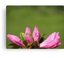 Buds Of Flowers Canvas Print