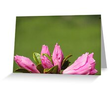 Buds Of Flowers Greeting Card
