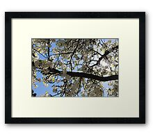 Ironic Trees For Your Ironic Season Framed Print