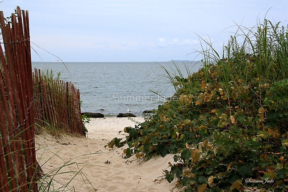 Fence Beside the Beach Path by SummerJade