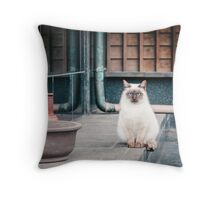 Cat, Adso, Temple Throw Pillow