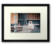 Cat, Aso, Temple Framed Print
