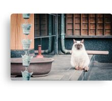 Cat, Adso, Temple Canvas Print