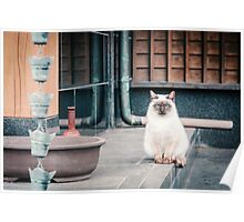 Cat, Adso, Temple Poster