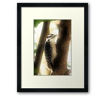The Little Woodpecker Framed Print