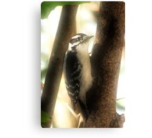 The Little Woodpecker Canvas Print