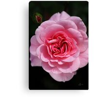Face On Rose Canvas Print