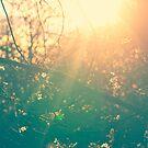 Radiates Light by Vicki Field