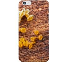 Sunshine peziza iPhone Case/Skin