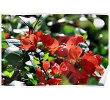 Full Bloom Of Love Poster