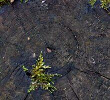 Ancient Nature Sticker