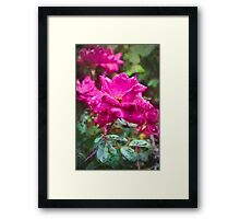 Red Rose Flowers, with painted finish Framed Print