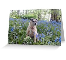 Whiskey in the BlueBell woods Greeting Card