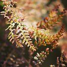 Spring ferns by Jonesyinc