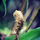 Unfolding fern by Jonesyinc