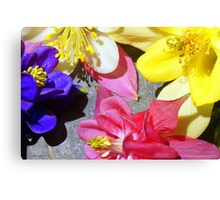 Colorful Columbines Canvas Print